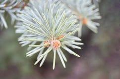 Orange Spruce Flower Royalty Free Stock Images