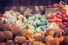 Orange Squash Royalty Free Stock Images