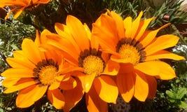 Orange squash arkivbild