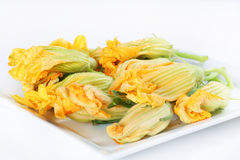 Orange squash blossoms Stock Photos