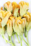 Orange squash blossoms close up Royalty Free Stock Photos