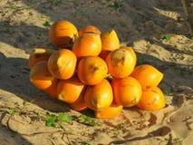 Orange Sri Lanka coconuts on sand Stock Images