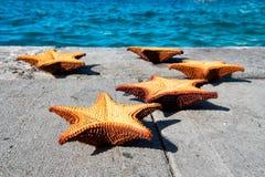 Orange starfich på grå färger Fotografering för Bildbyråer