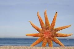 Orange Starfish stock images