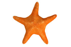 An orange starfish. Isolated on a white background Royalty Free Stock Photo