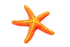 Orange starfish Royalty Free Stock Image