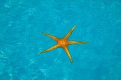 Orange starfish on blue backgroundpool Royalty Free Stock Photography