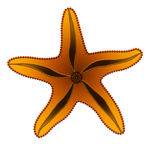 Orange starfish Royalty Free Stock Images