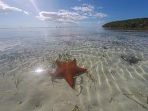 Orange Starfish im seichten, klaren Wasser stockfotografie
