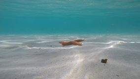 Orange starfish near the shore in a turquoise water. Summer time stock video footage