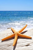 Orange starfish on an old washed-out tree trunk on the beach. Closeup of an orange starfish on an old washed-out tree trunk on the beach, with a bright blue sea Stock Photo