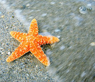 Orange starfish on sand Royalty Free Stock Photography