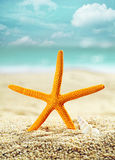 Orange starfish on a tropical beach. Standing upright in the golden sand with the seashore and ocean behind, conceptual of a summer vacation Royalty Free Stock Photography