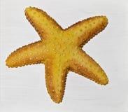 Orange Starfish on White Background. Orange starfish on a white rustic background Stock Photography