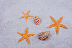 Orange starfishes and shells on a sand background Stock Photos