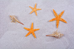 Orange starfishes and shells on a sand background Stock Photo