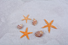 Orange starfishes and shells on a sand background Royalty Free Stock Photo