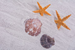 Orange starfishes and two shells on a sand background Royalty Free Stock Photos
