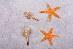 Orange starfishes and two shells on a sand Stock Photo
