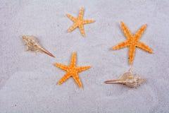 Orange Starfishes und Oberteile auf einem Sandhintergrund Stockfoto