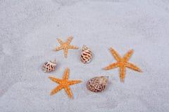 Orange Starfishes und Oberteile auf einem Sandhintergrund Lizenzfreies Stockfoto