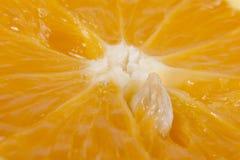 Orange sten i orangeträmassa Arkivbilder