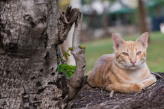 Orange stray cat Stock Photos