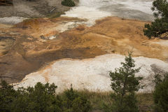 Orange streams of geothermal deposits, with pine trees, Yellowst Royalty Free Stock Photos