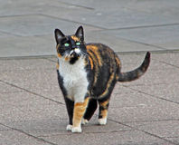 Orange the street cat Royalty Free Stock Photo