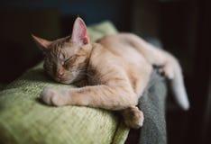 Orange strimmig kattkatt som hemma sover på en soffa Arkivfoton