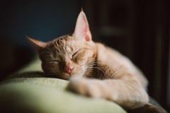 Orange strimmig kattkatt som hemma sover på en soffa Royaltyfri Bild