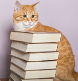 Orange striped cat and books Stock Images