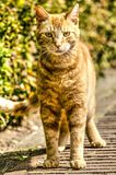 Young cat on a brick path stock photos