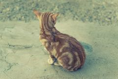 Orange striped cat stock image