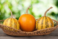 Orange and striped decorative pumpkins on a wooden table in  wicker basket with blurred garden background Royalty Free Stock Photos