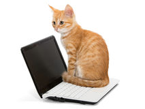 Orange striped kitten and laptop Stock Photos