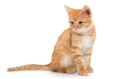 Orange, striped, little kitten Stock Images