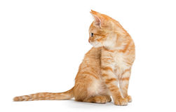 Orange, striped, little kitten Royalty Free Stock Image