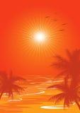 Orange summer Royalty Free Stock Photo