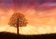 Orange summer tree Stock Photography