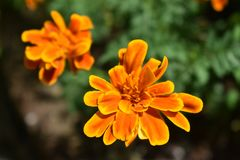 Orange sunburst royaltyfria bilder