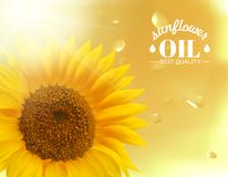 Orange sunflower with oil background. Vector illustration Royalty Free Stock Photos