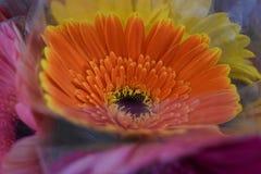 Orange sunflower shaped stock images