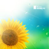 Orange sunflower with spring background. Vector illustration Stock Image