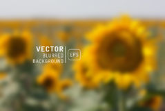 Orange sunflower with spring background. Vector illustration. Blurry unfocused background Royalty Free Stock Photography