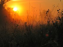 Orange Sunrise. Sunrise in Meadow Royalty Free Stock Photography