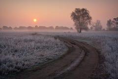 Orange sunrise gray autumn. Stock Photography