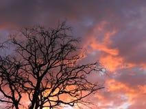 Orange sunrise, Lithuania Royalty Free Stock Photo