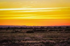 Orange sunrise in the Pilbara. Sunrise lights up the flowers and grasses in the Pilbara Stock Photography