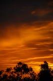 Orange sunrise with trees. Stock Photography